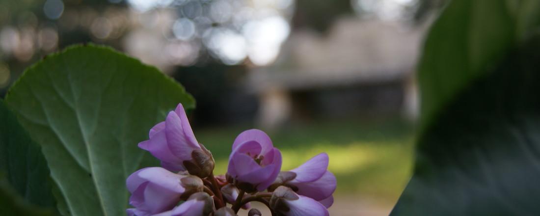 Der Zauber des Frühlings -  März in Meran